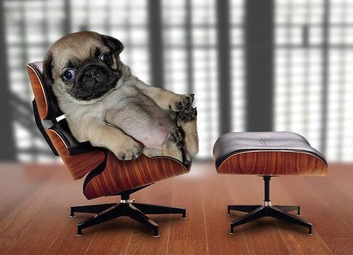 armchair-pug