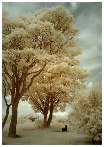 the_park_infrared_by_dingodave