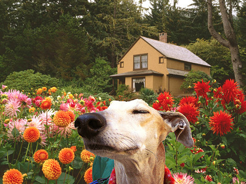 dog-sniffing-flowers