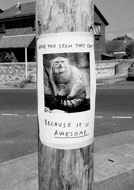 have you seen this cat cuz it is awesome