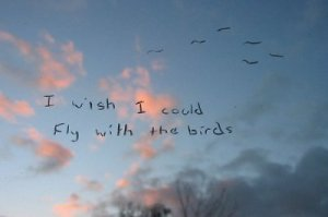 i wish i could fly with the birds