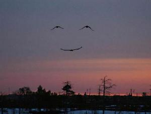 smile of birds
