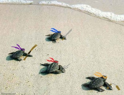 ninja turtles into the water