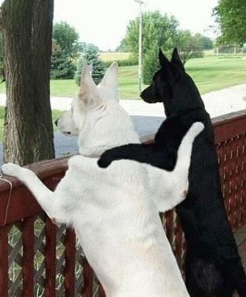 1 black, 1 white dog friends