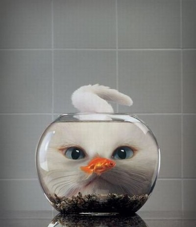 cat fish bowl