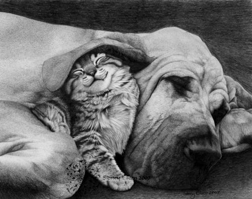 cat under dog's ear