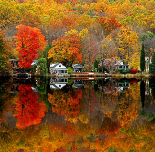 fall foliage perfection