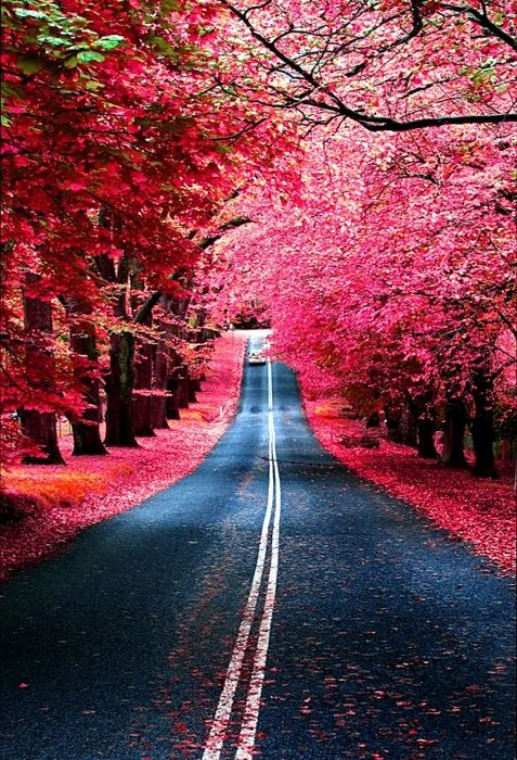 fall red leaves road