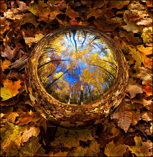fall waterdrop in leaves