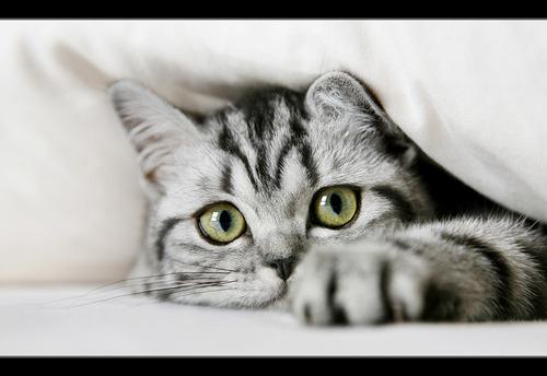 kitten gray and black