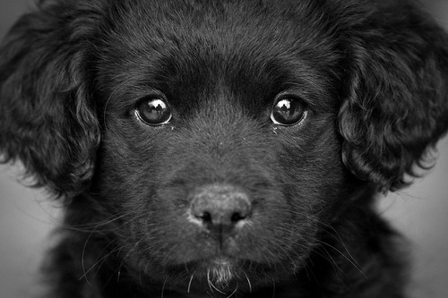 dog black close up