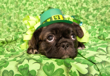 puppy-st patricks day