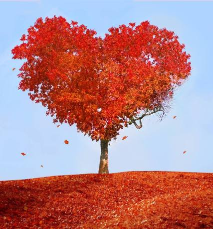autumn heart tree fall