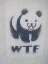 panda wtf