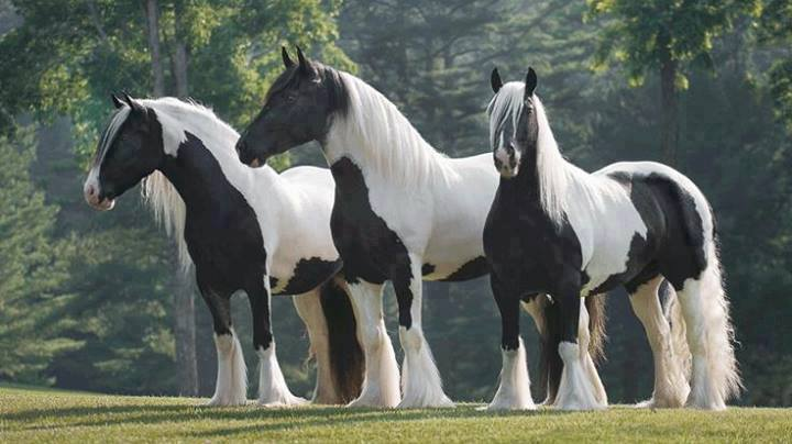 Black and white horse picture - photo#28
